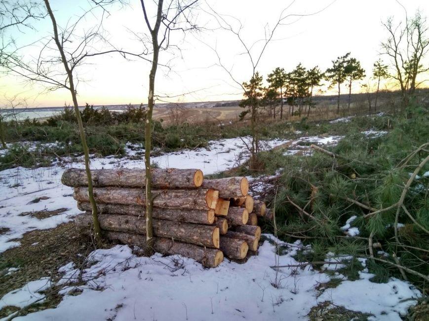 В заповеднике Запорожской области вырубают лес, - ФОТОФАКТ, фото-4