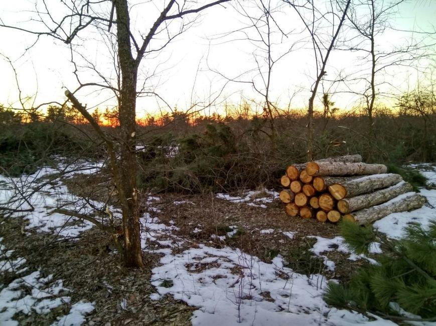 В заповеднике Запорожской области вырубают лес, - ФОТОФАКТ, фото-2