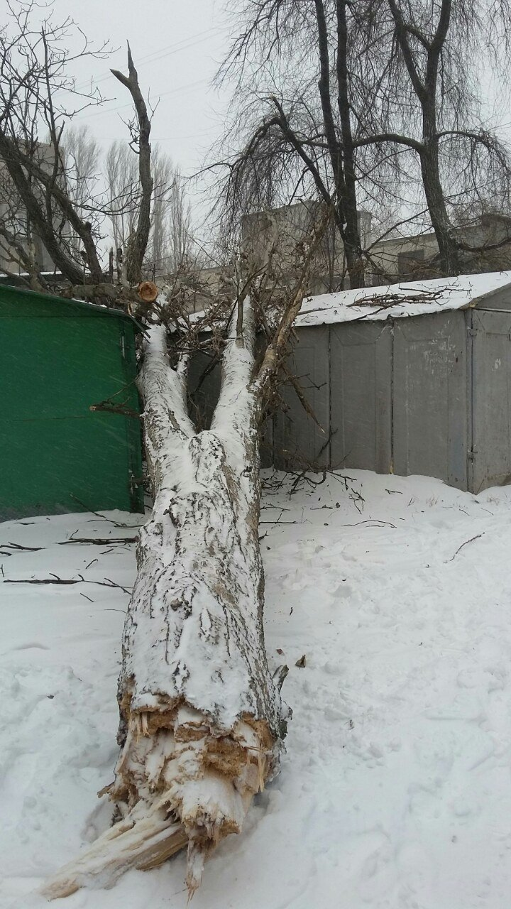В одесских дворах появился новый аттракцион - лежащие на зданиях деревья (ФОТО), фото-3