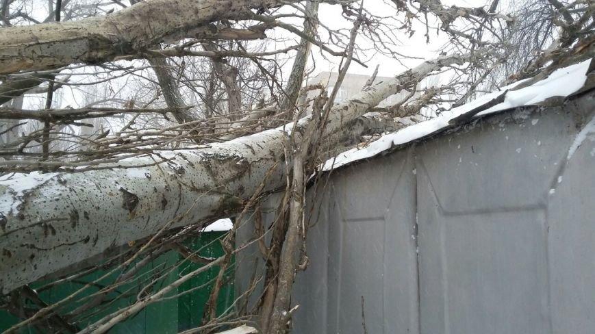 В одесских дворах появился новый аттракцион - лежащие на зданиях деревья (ФОТО), фото-4