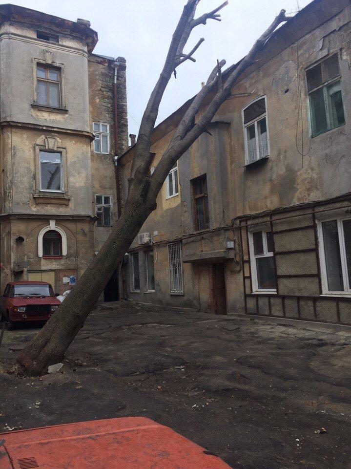 В одесских дворах появился новый аттракцион - лежащие на зданиях деревья (ФОТО), фото-2