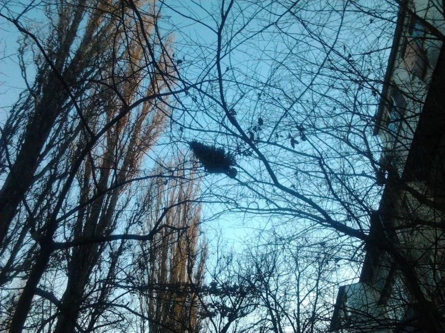 Одессит оригинально вынес новогоднюю елку (ФОТО), фото-1