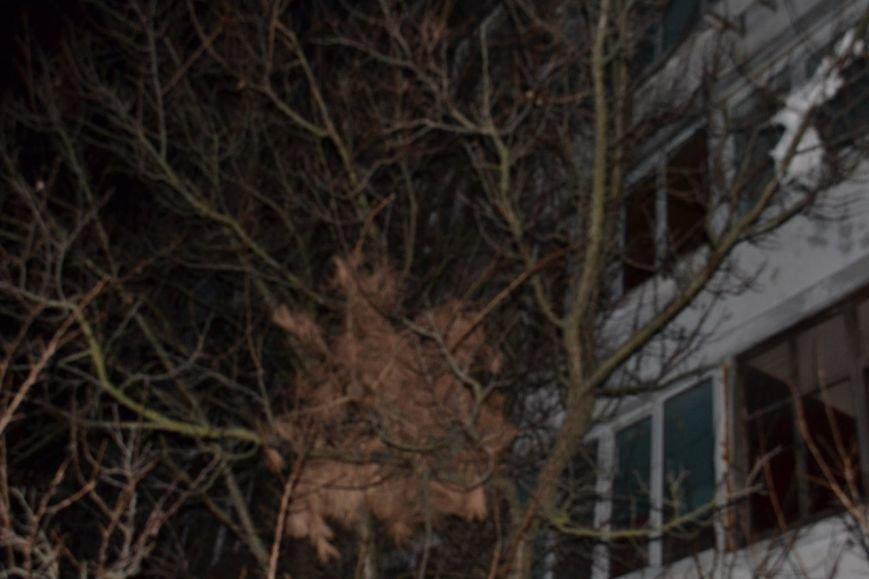Новомосковск 0569 елка на дереве