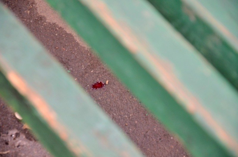 В центре Одессы на детской площадке произошло нападение с ножом (ФОТО), фото-5