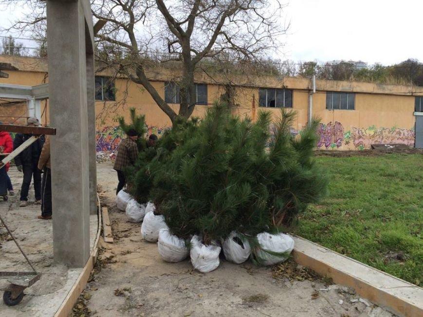 На одесском Ланжероне погибли десятки молодых сосен (ФОТО), фото-1