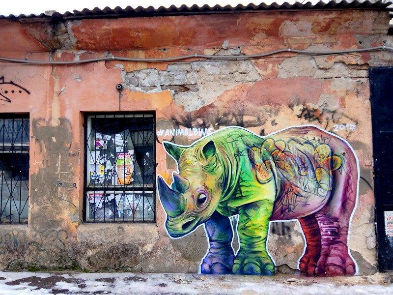 В центре Одессы обнаружили носорога (ФОТО), фото-2
