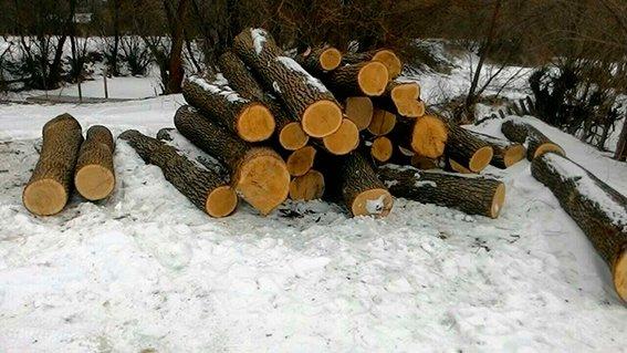 Буковинцям не вдалося вивезти крадений дуб, фото-1