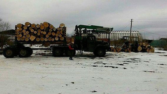 Буковинцям не вдалося вивезти крадений дуб, фото-2