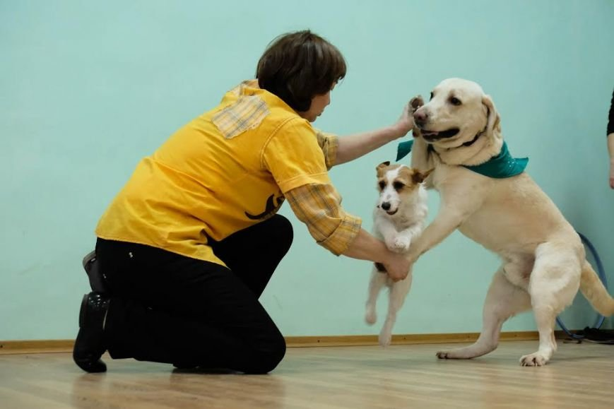 В Днепре собаки-реабилитологи приехали к детям из противотуберкулезного санатория (ФОТО), фото-2