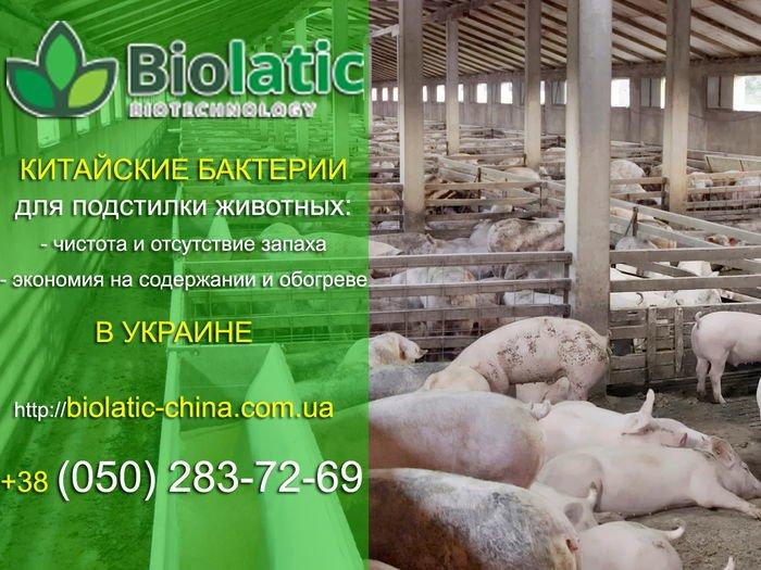 Китайские бактерии для переработки свиного навоза, фото-1