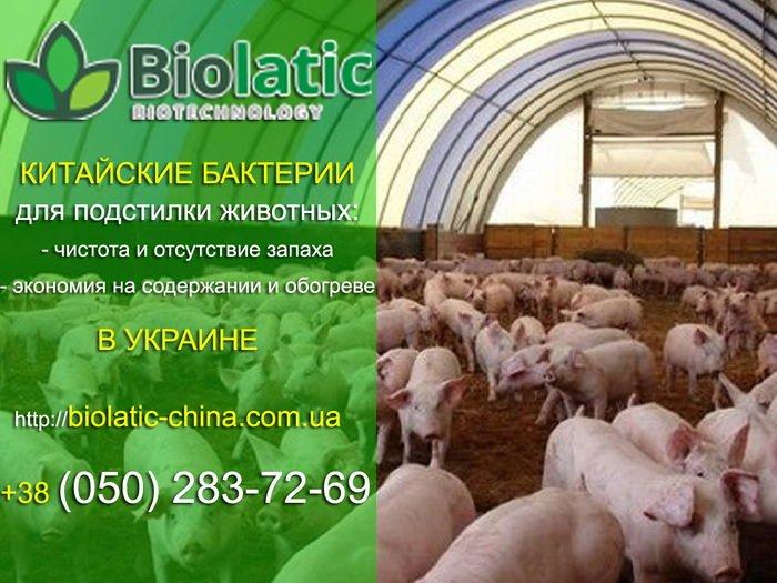 Ферментационная подстилка для свиней, фото-1