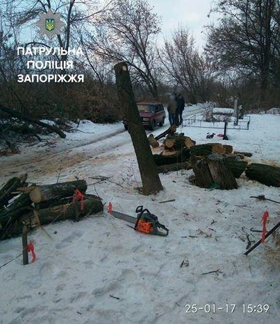 Несколько браконьеров рубили деревья в разных точках Запорожья, - ФОТО, фото-3
