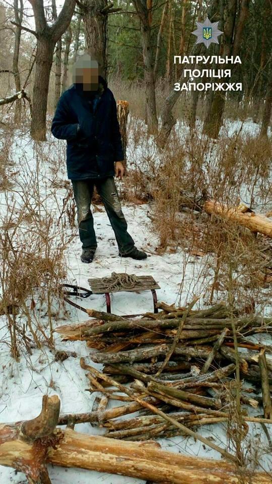Несколько браконьеров рубили деревья в разных точках Запорожья, - ФОТО, фото-1