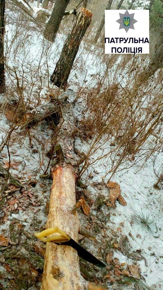Несколько браконьеров рубили деревья в разных точках Запорожья, - ФОТО, фото-4