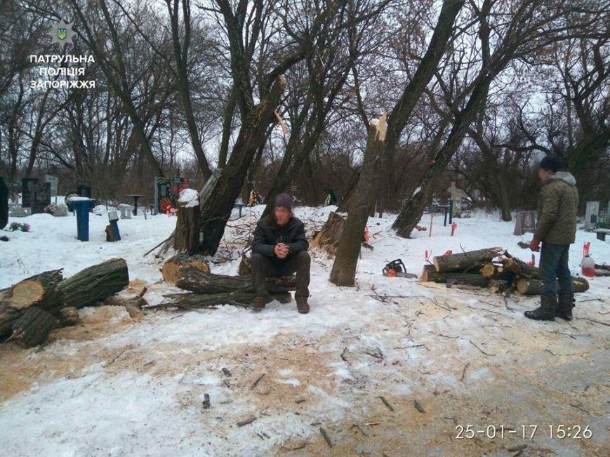 Несколько браконьеров рубили деревья в разных точках Запорожья, - ФОТО, фото-2
