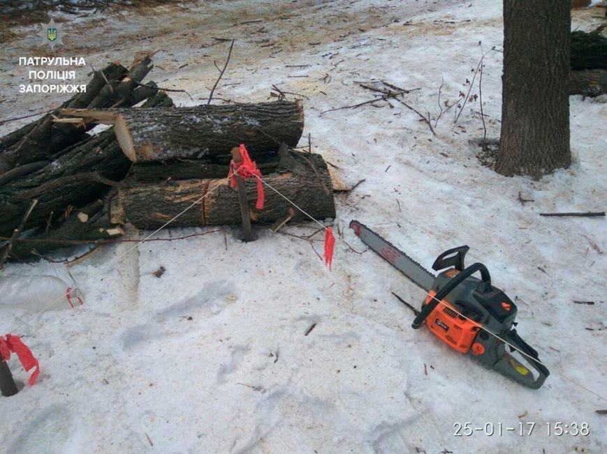 Несколько браконьеров рубили деревья в разных точках Запорожья, - ФОТО, фото-7