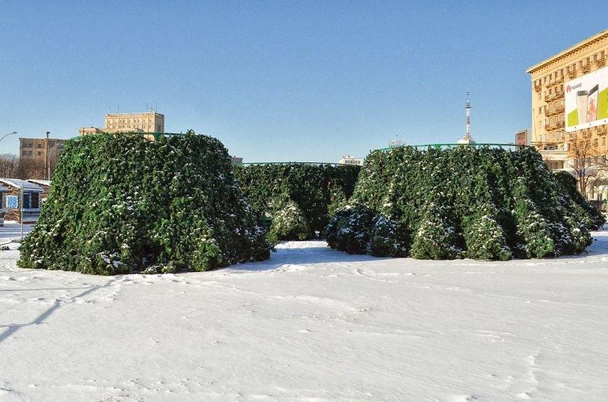 На площади Свободы начали разбирать новогоднюю елку (ФОТО), фото-4