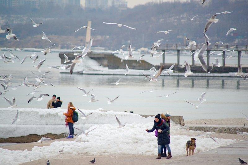 Ланжерон приготовился к выходным: лед ждет одесситов (ФОТО), фото-9