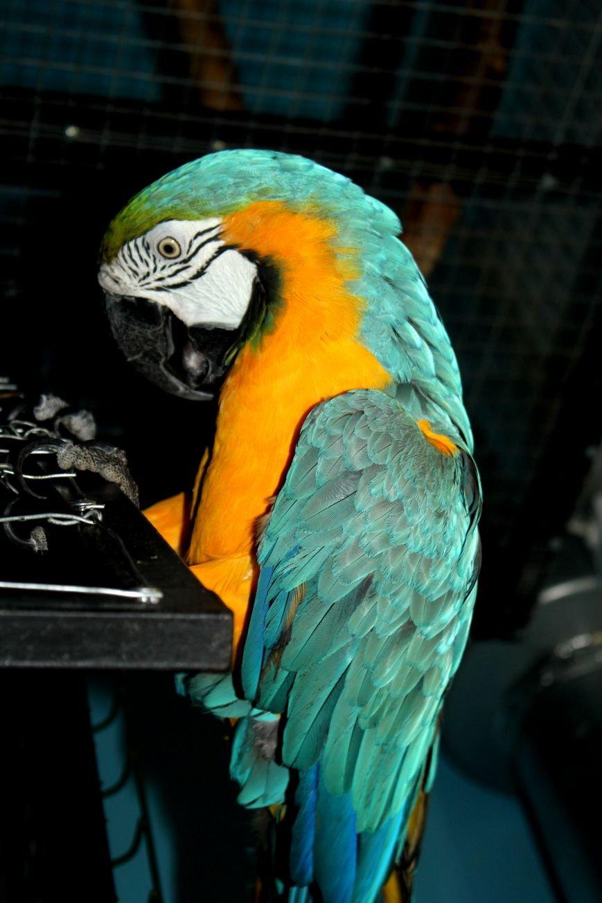 Экзотические животные, которых нередко содержат дома (ФОТО), фото-2