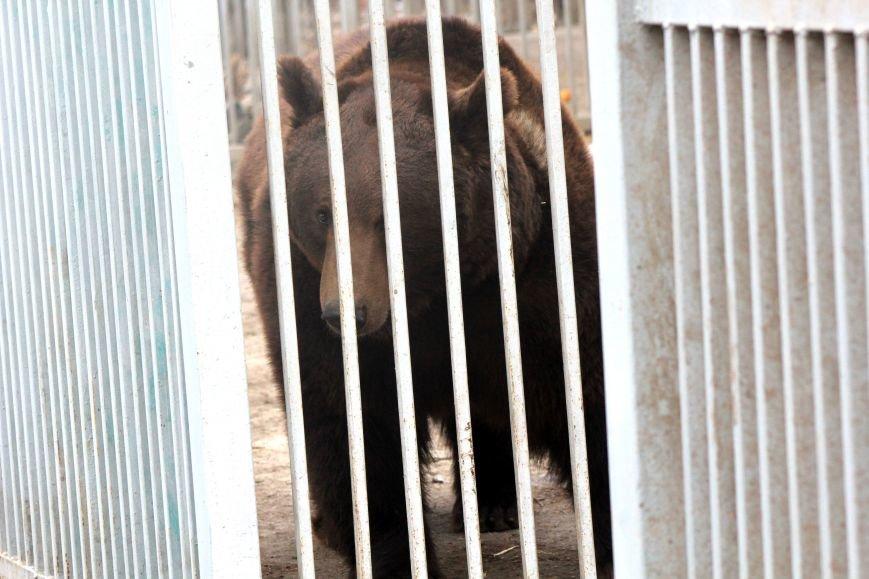 Экзотические животные, которых нередко содержат дома (ФОТО), фото-12