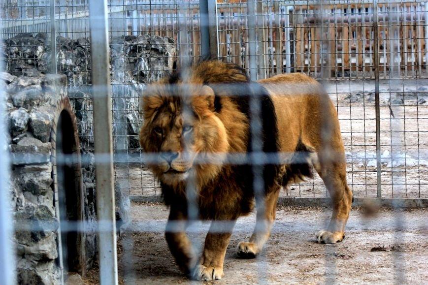 Экзотические животные, которых нередко содержат дома (ФОТО), фото-9