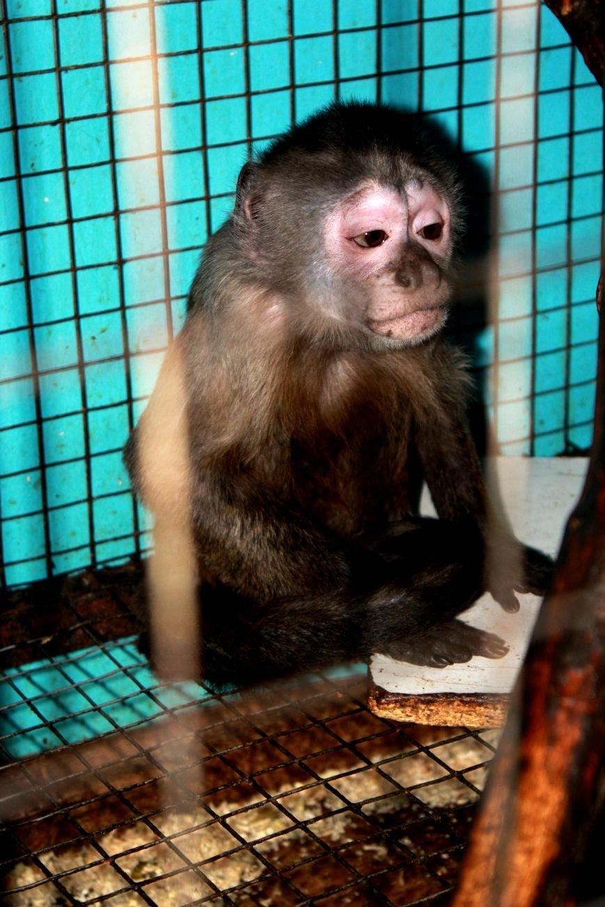 Экзотические животные, которых нередко содержат дома (ФОТО), фото-11
