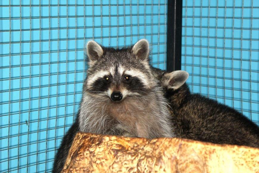Экзотические животные, которых нередко содержат дома (ФОТО), фото-5