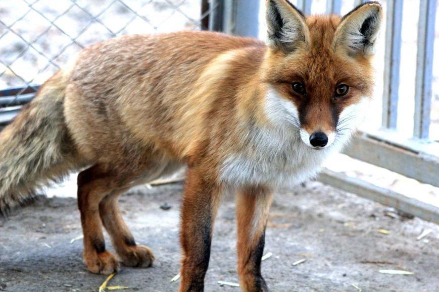 Экзотические животные, которых нередко содержат дома (ФОТО), фото-8