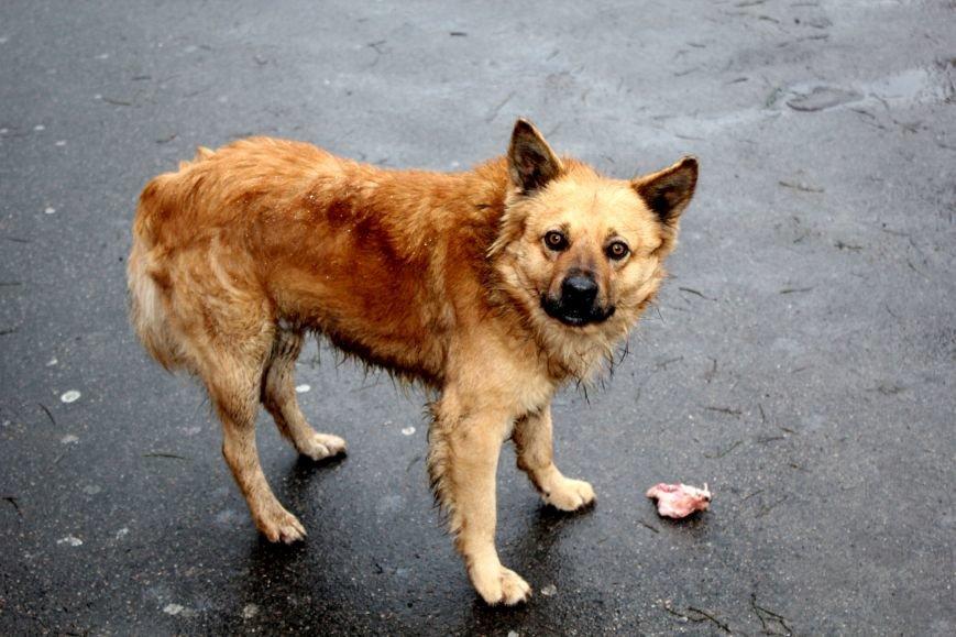 Экзотические животные, которых нередко содержат дома (ФОТО), фото-1