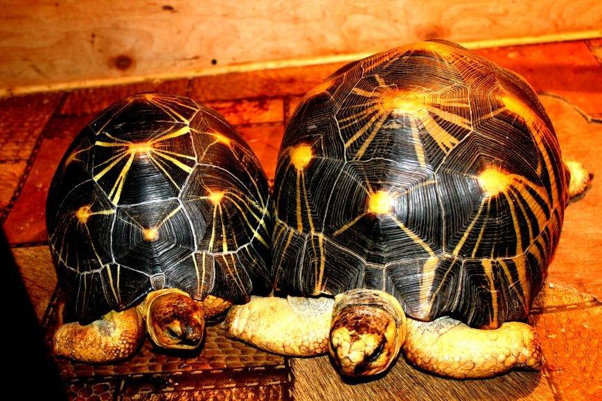Экзотические животные, которых нередко содержат дома (ФОТО), фото-7