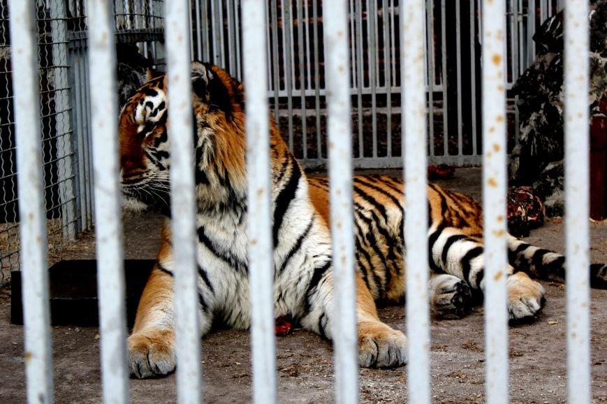 Экзотические животные, которых нередко содержат дома (ФОТО), фото-10
