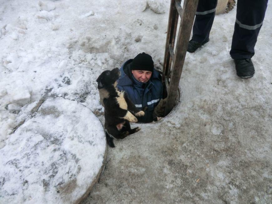 Человек собаке друг: в Днепропетровской области спасли щенка (ФОТО), фото-2