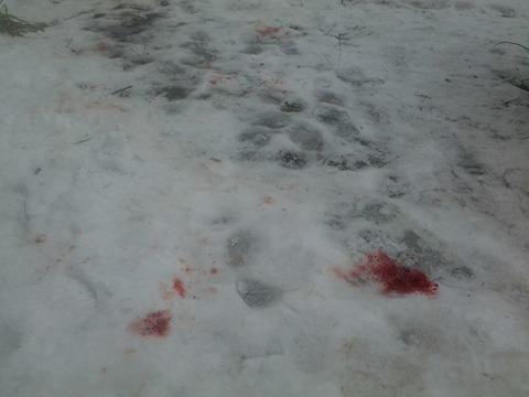 Перестрілка у районі ЛПЗ : НОВІ ФОТО з місця події, фото-1