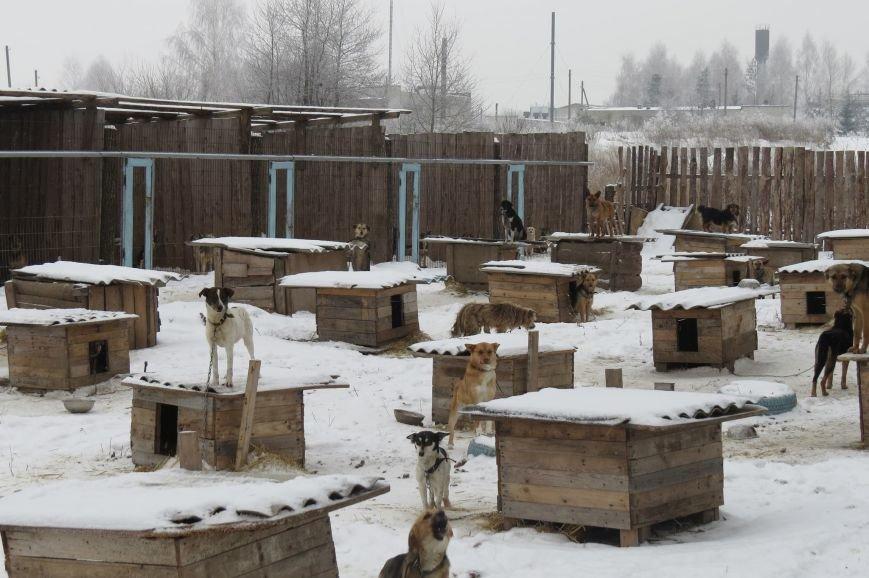 Волонтери  ЗОШ № 9 з благодійною місією  в черговий раз відвідали Новоград - Волинський притулок для собак, фото-5