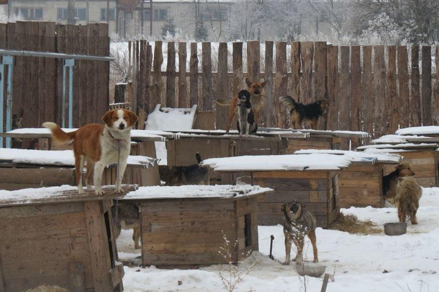 Волонтери  ЗОШ № 9 з благодійною місією  в черговий раз відвідали Новоград - Волинський притулок для собак, фото-2