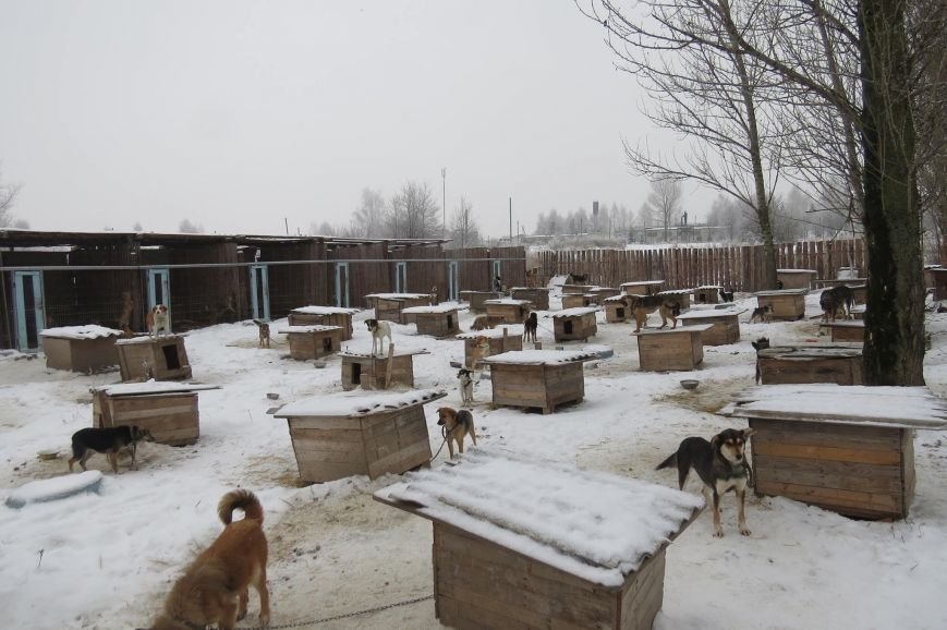 Волонтери  ЗОШ № 9 з благодійною місією  в черговий раз відвідали Новоград - Волинський притулок для собак, фото-4