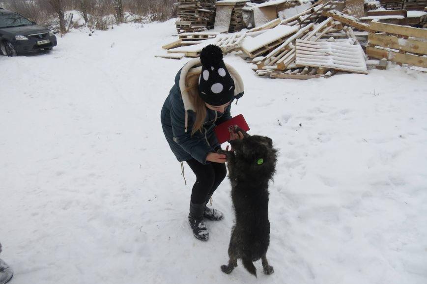 Волонтери  ЗОШ № 9 з благодійною місією  в черговий раз відвідали Новоград - Волинський притулок для собак, фото-6
