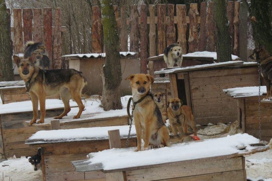 Волонтери  ЗОШ № 9 з благодійною місією  в черговий раз відвідали Новоград - Волинський притулок для собак, фото-3