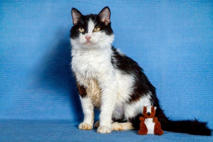 5 запорожских котиков, которым срочно нужны хозяева, - ФОТО, фото-4