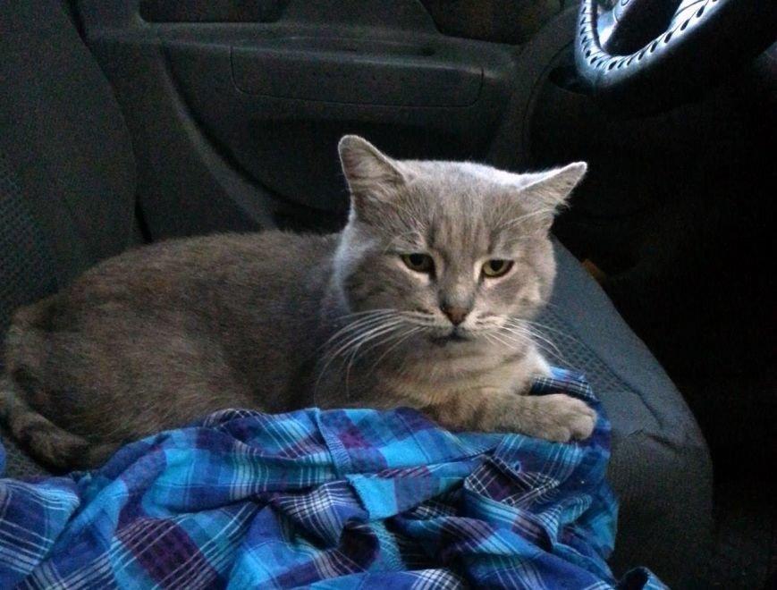 5 запорожских котиков, которым срочно нужны хозяева, - ФОТО, фото-2