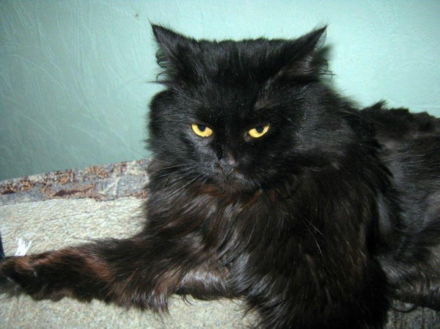 5 запорожских котиков, которым срочно нужны хозяева, - ФОТО, фото-8