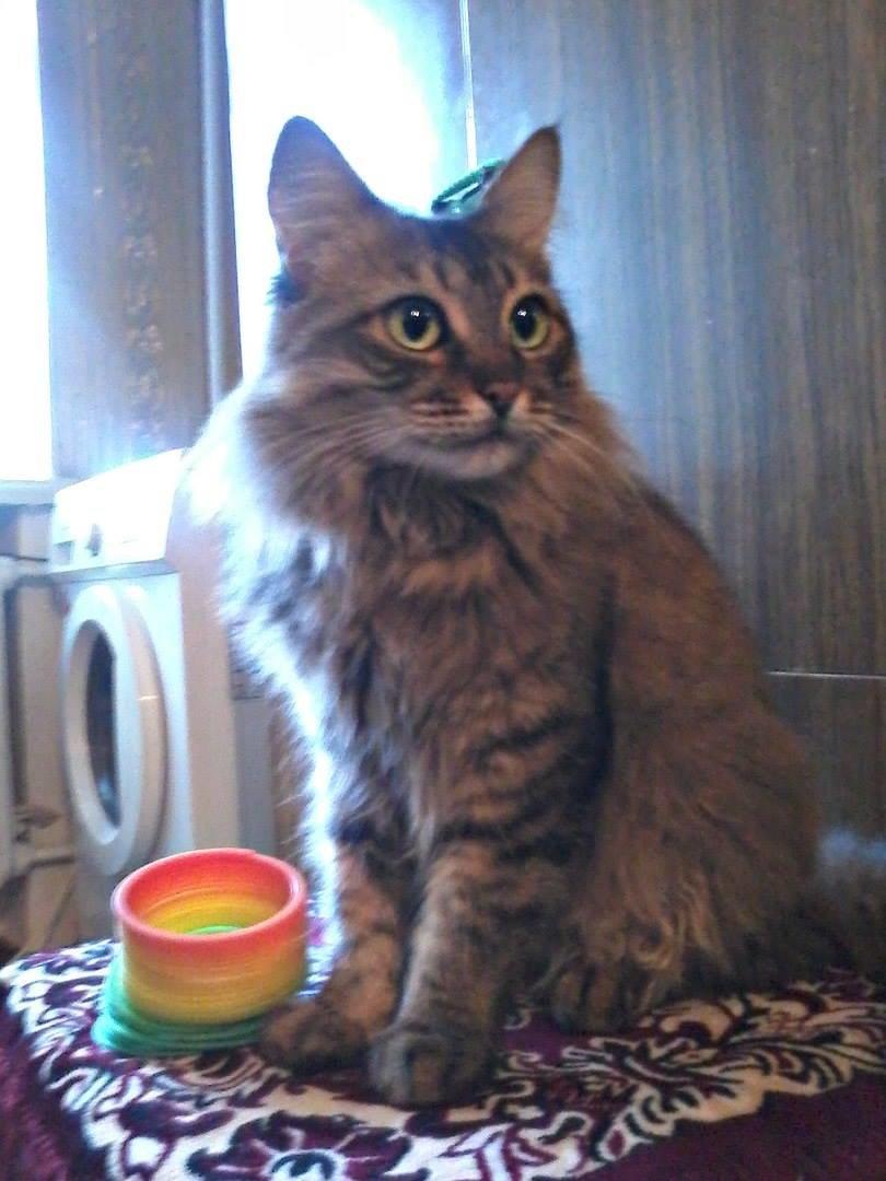5 запорожских котиков, которым срочно нужны хозяева, - ФОТО, фото-7