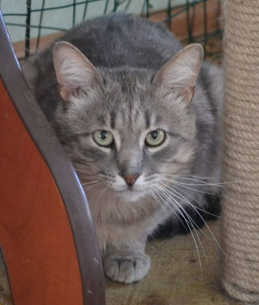 5 запорожских котиков, которым срочно нужны хозяева, - ФОТО, фото-3