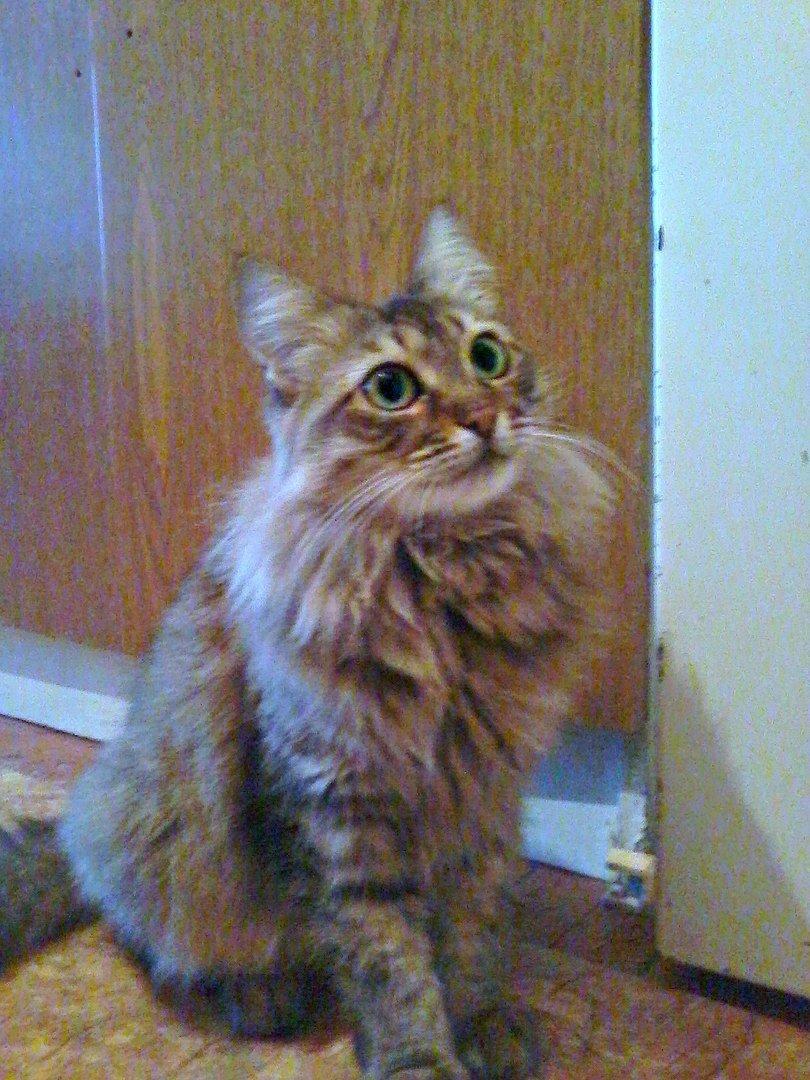 5 запорожских котиков, которым срочно нужны хозяева, - ФОТО, фото-6