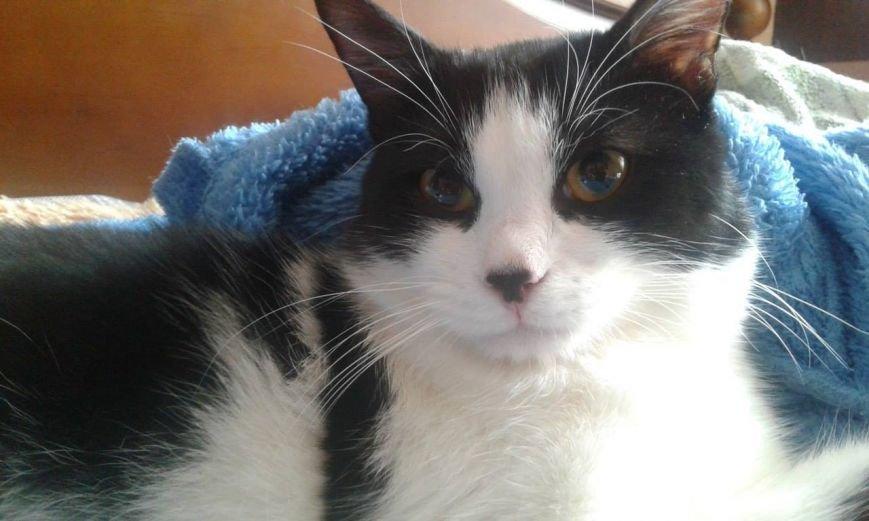 5 запорожских котиков, которым срочно нужны хозяева, - ФОТО, фото-1