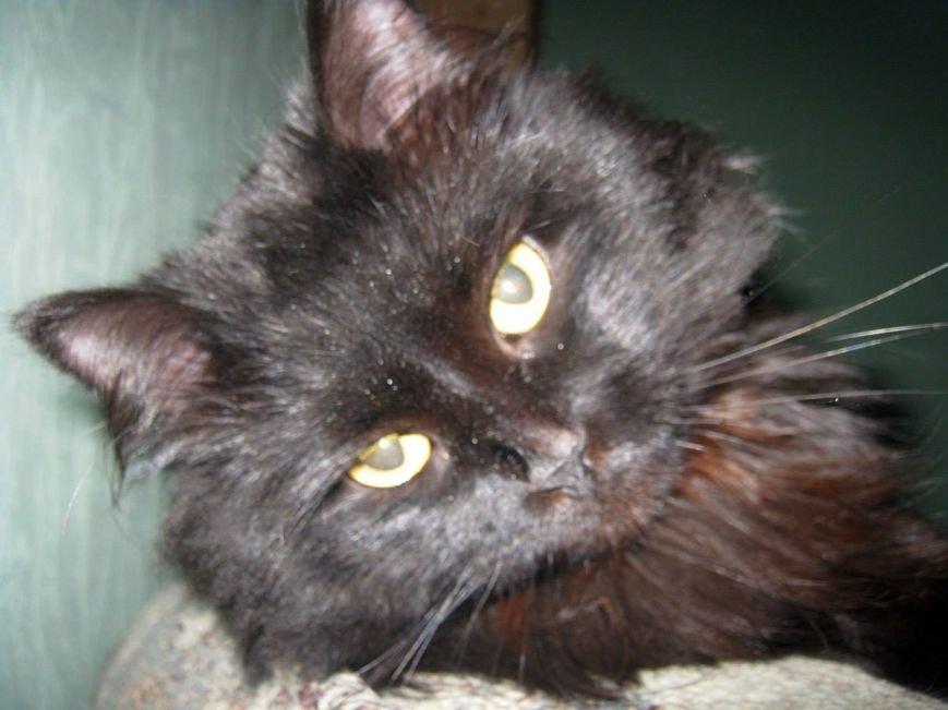 5 запорожских котиков, которым срочно нужны хозяева, - ФОТО, фото-9