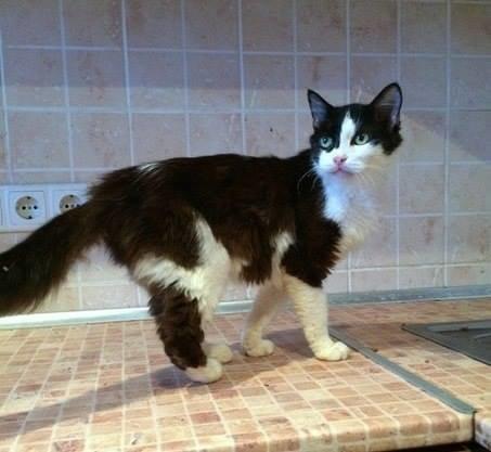 5 запорожских котиков, которым срочно нужны хозяева, - ФОТО, фото-5