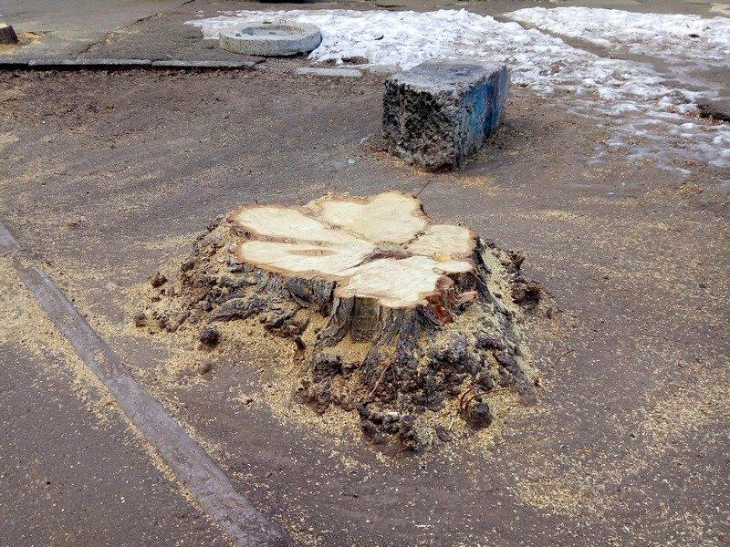 В одесском Старо-Базарном сквере спилили деревья (ФОТО), фото-2