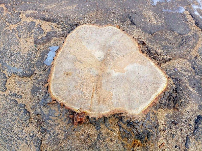 В одесском Старо-Базарном сквере спилили деревья (ФОТО), фото-5