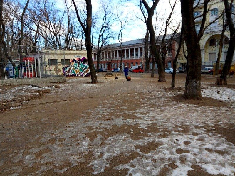 В одесском Старо-Базарном сквере спилили деревья (ФОТО), фото-9